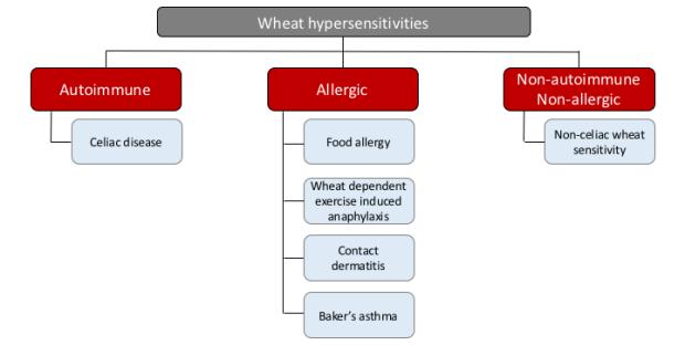 flowchart of wheat hypersensitivities