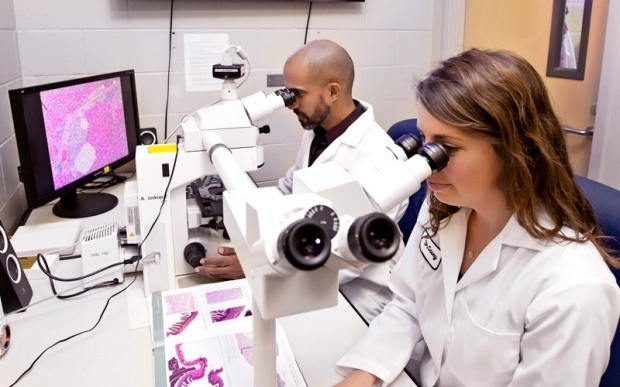 Two researchers looking through microscopes in lab