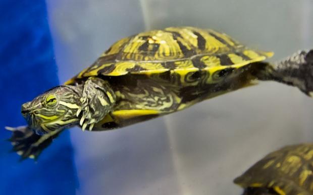 turtle-CTA-web