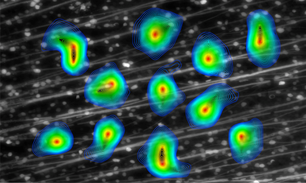 A figure from a 2008 publication by the Chichilnisky lab shows electrophysiological images of ganglion cells overlaid on an image of guinea pig retina stained for ganglion cells.