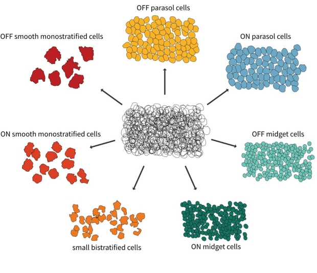 The jumbled mess of all receptive fields recorded in a monkey retina can be divided into neat mosaics belonging to different cell types such as OFF parasol, ON midget, or small bistratified cells.