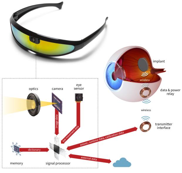 Schematic showing how a camera located on a pair of sunglasses is connected to a signal processor, which in turn transmits stimulation data wirelessly to the implant located on the retinal surface inside the eye. The signal processor also receives data from the implant, a memory chip, an external server, and a sensor monitoring eye movements.