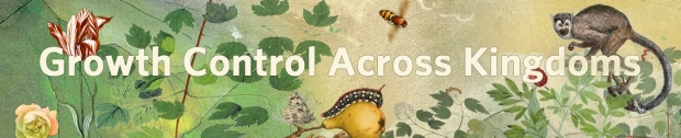 """painting of jungle flora and fauna with flowers, insects, and monkey, words reading """"growth control across kingdoms"""""""