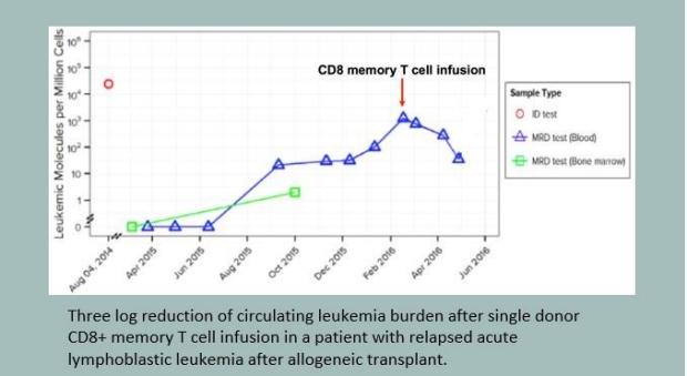 Circulating Leukemia Burden