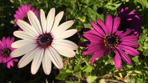 esther_flower