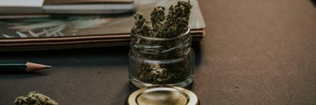 Dried cannabis flower on a table