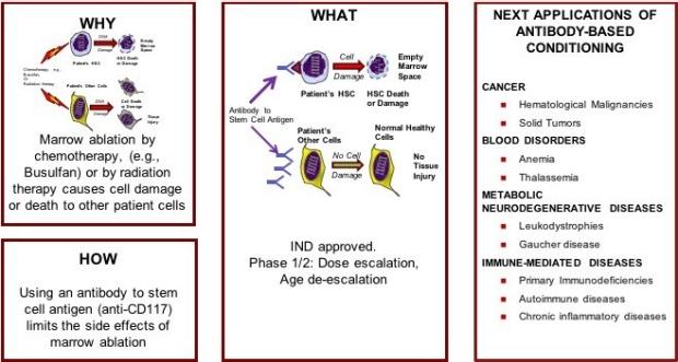 Platform 1: Blood Stem Cell Engineering and Transplantation