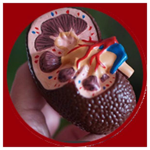 Chronic Kidney Disease Care