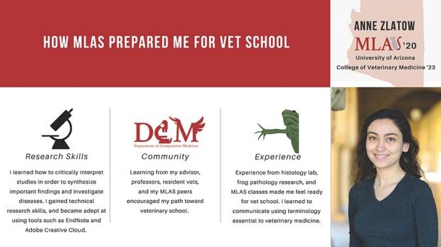 How MLAS prepared me for Vet School by Anne Zlatow