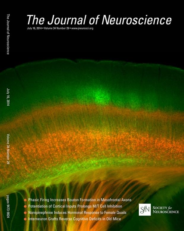 J Neurosci 34(29) 2014 cover image