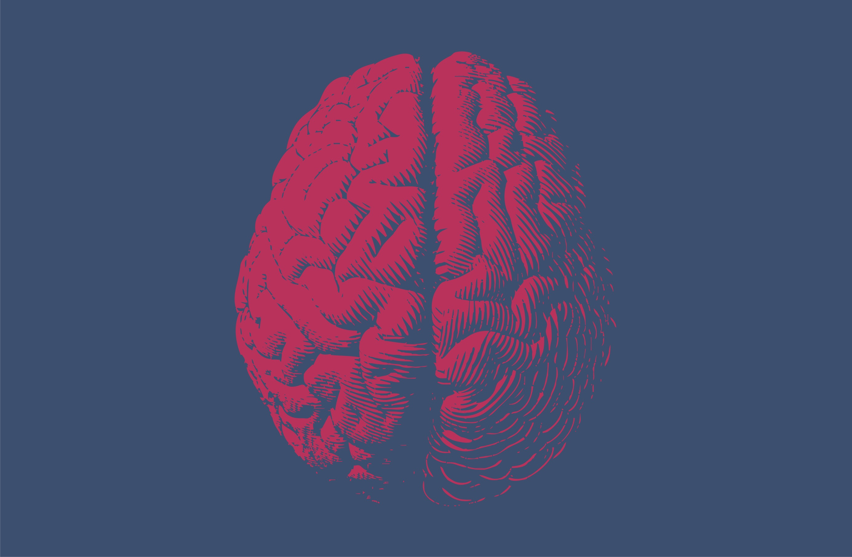 Face, brain development tightly linked, study finds