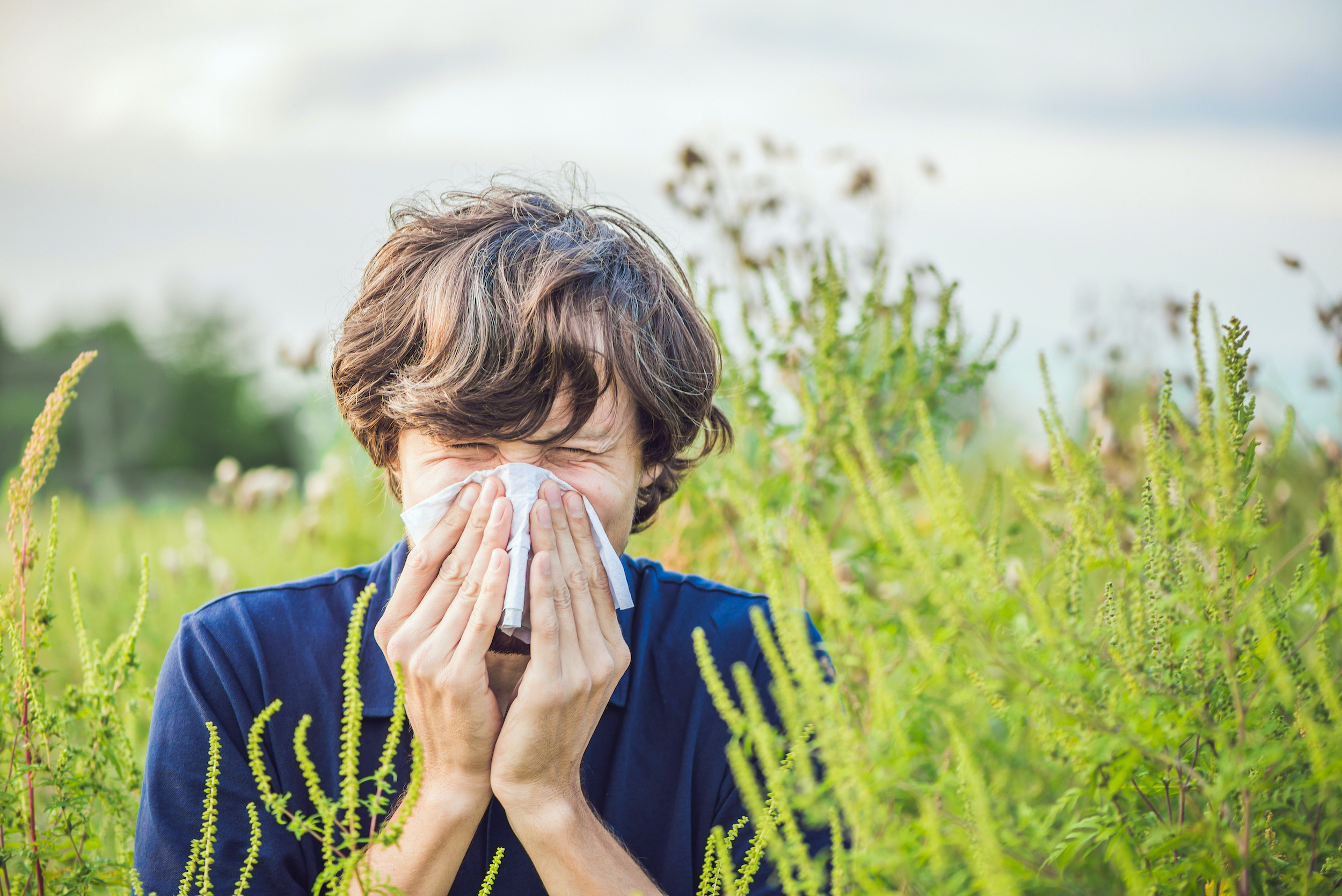 Climate change linked to longer allergy season in Bay Area, Stanford study finds