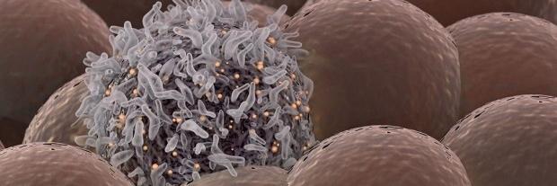 Lymphocyte SEM Image