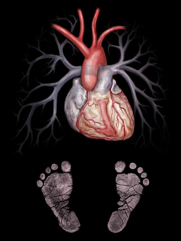 medical illustration of pediatric heart and lungs