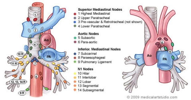 medical illustration of lymph nodes