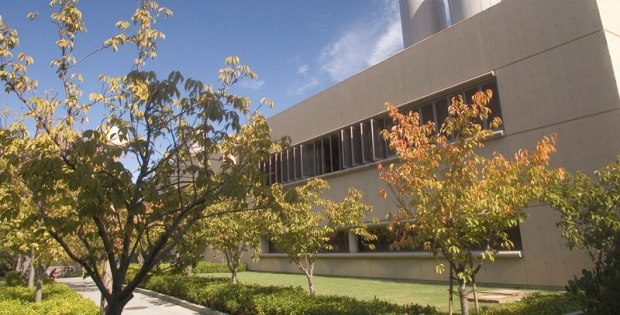 front of Falk Building with tree-lined path