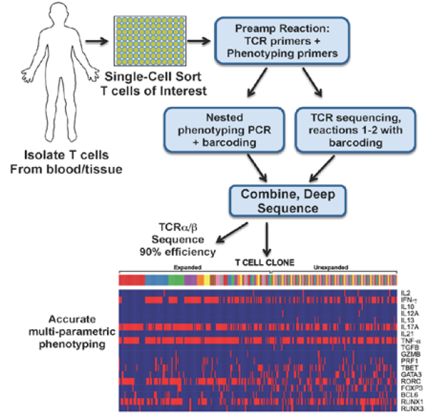 single_t_cell_analysis