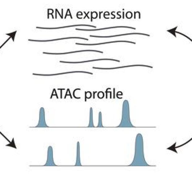 Figure 1 from PNAS study