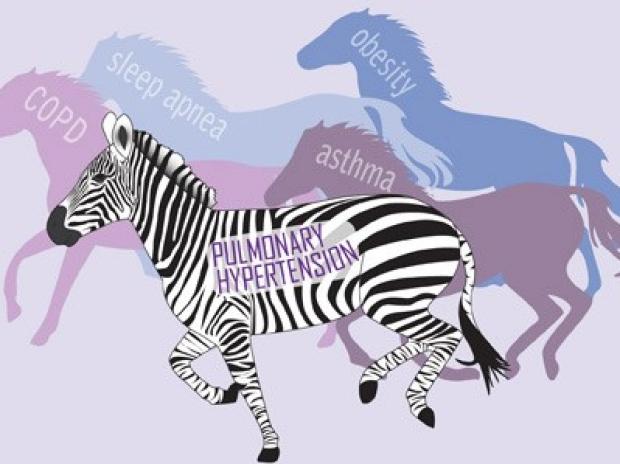 Zebra: Pulmonary Hypertension