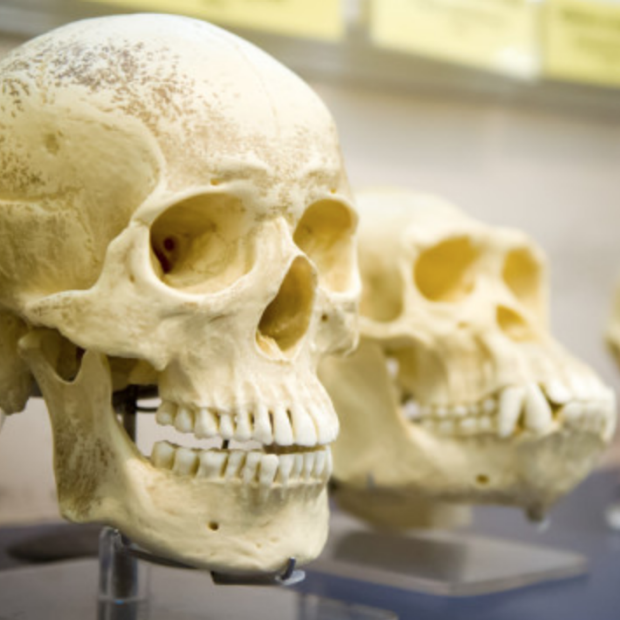 Skull image screenshot from Discover story