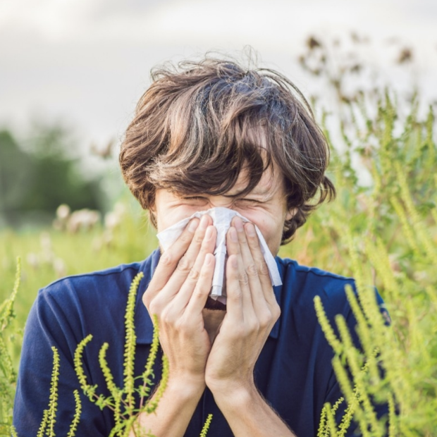 Stanford researchers have found that changes in temperature and rainfall have lengthened allergy season in the Bay Area. Elizaveta Galitckaia/Shutterstock