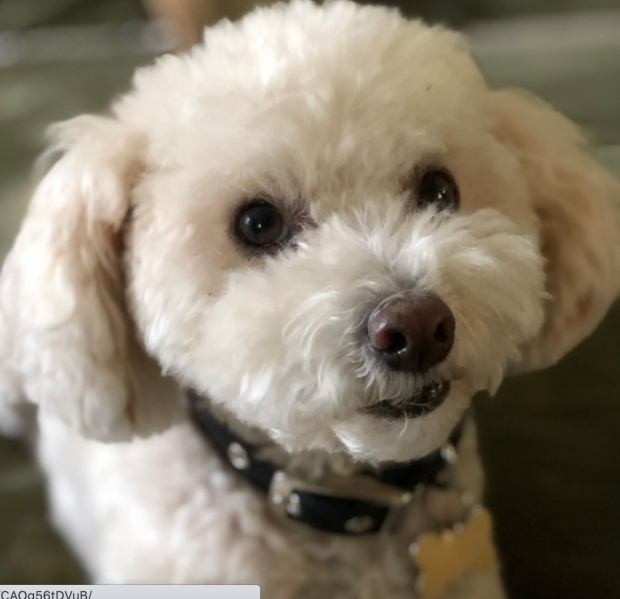 Buddy the pet partner
