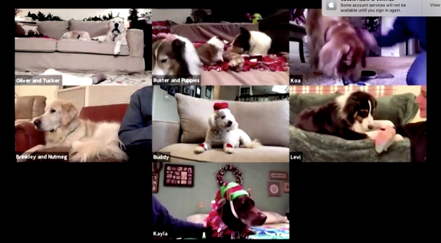 Screenshot of Dog therapy Zoom Call