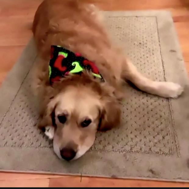 Therapy dog screenshot