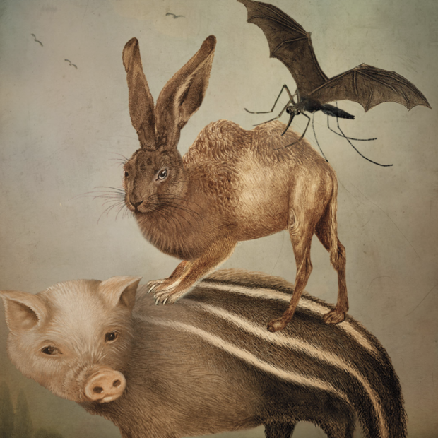 Bug on top of rabbit on top of pig/skunk illustration from Stanford Magazine story