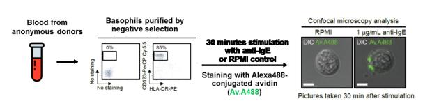 Figure from Mukai et al, 2017