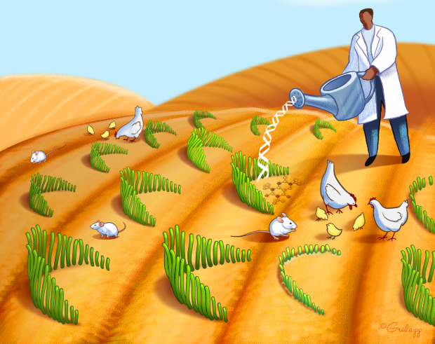 Illustration of a researcher in a white coat watering the hair cells surrounded by white mice and chicken