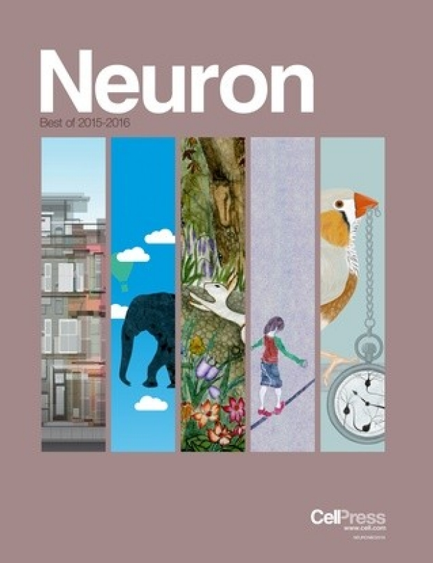 Best of Neuron Kaltschmidt Lab 2015-2016
