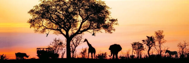 Photo: African Safari