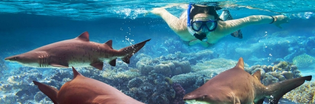 Photo: swimming with sharks