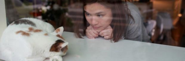 Photo: cat in a window
