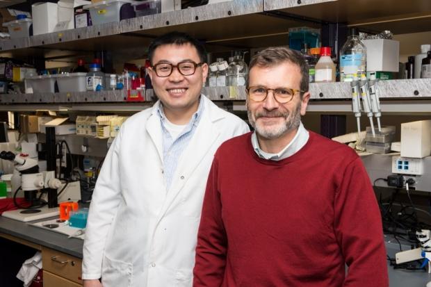 Fan Zhang and Ross Metzger, PhD