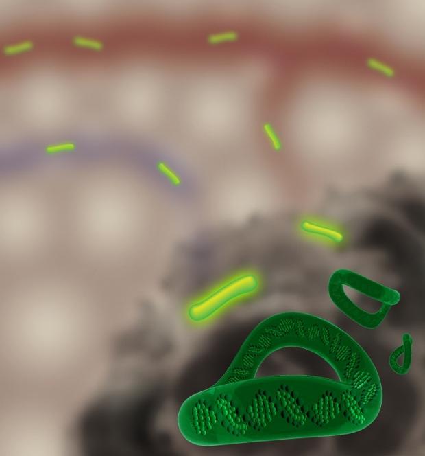 Concept illustration of tumor-activatable minicircles