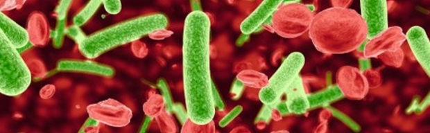 3D illustration of bacteria in blood