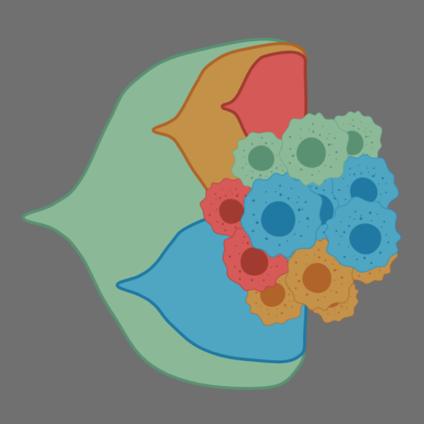 Tumor evolution