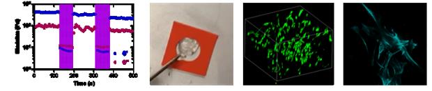 Supramolecular gelatin hydrogels