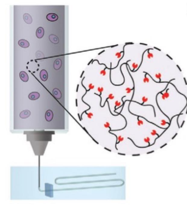 bioprinting graphic