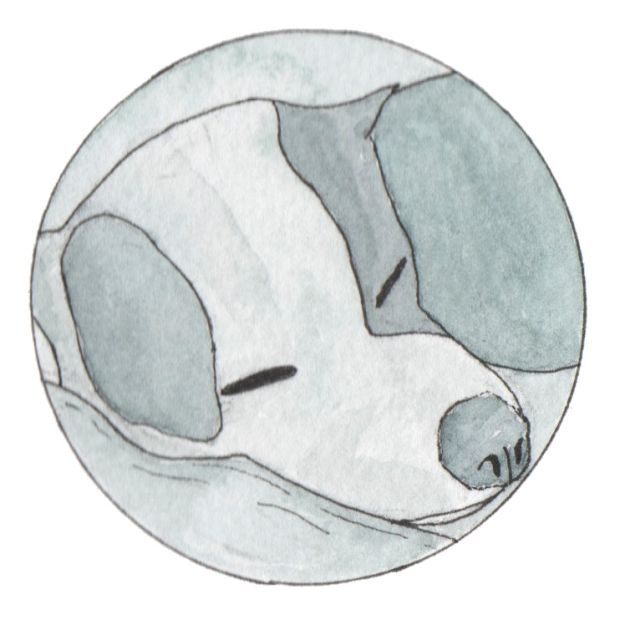 Mignot Sleep Dog