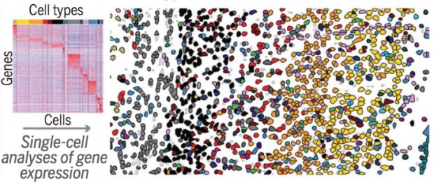 STARmap representative image