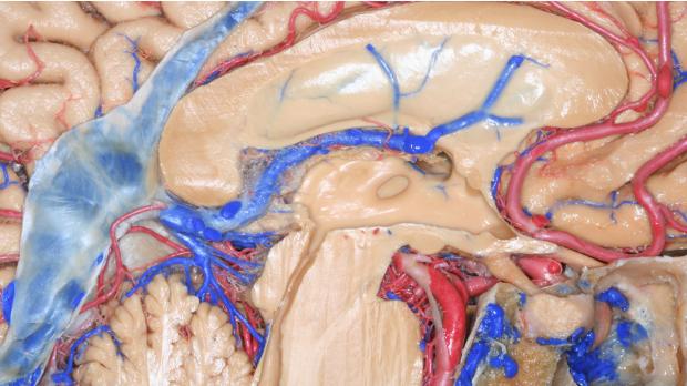 neurosurgery_Pituitary_SurgicalTechnique_Banner_JFM