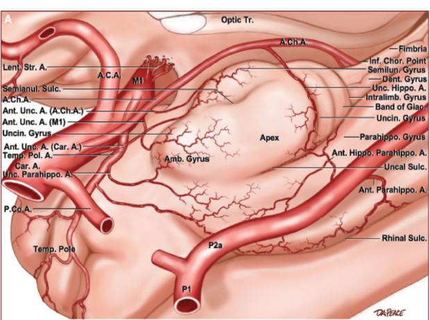 neurosurgery_research_lab_SNFTVR_JFM_Picture15