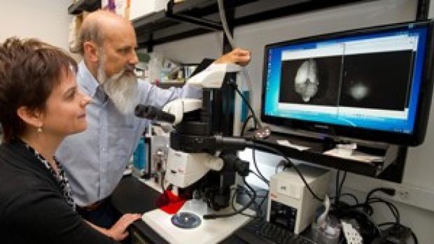 Scientists develop 'molecular flashlight' that illuminates brain tumors in mice