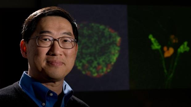 Researchers discover insulin-decreasing hormone in flies, humans