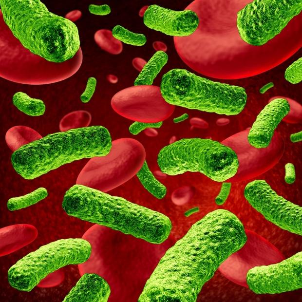 Sepsis bacteria