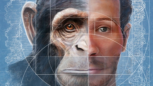 Scientists home in on origin of human, chimpanzee facial differences