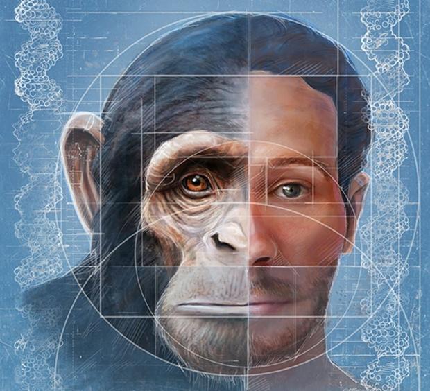 Chimp-human facial development